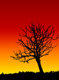 Dead tree. Silhouette at dawn/dusk vector illustration