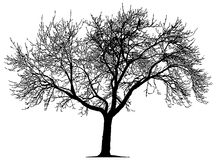 Dead Tree. Silhouette of dead tree with branch details stock illustration