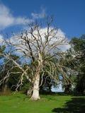Dead tree. The dead tree. Picture was taken in Sweden (Uppsala region stock photo