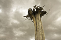 Dead tree Stock Photos