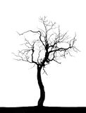 Dead  tree. Isolated in white Royalty Free Stock Photography