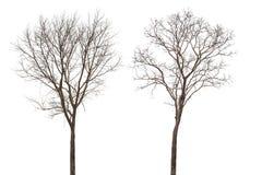 Free Dead Tree Royalty Free Stock Photography - 51077417