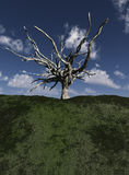 Dead Tree 7 Stock Photos