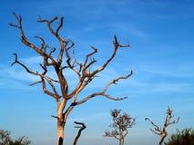 Dead tree 9 Stock Image