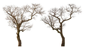 Free Dead Tree Stock Photography - 94299442