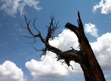 Dead Tree. Almost silhouetted tree truck royalty free stock photos