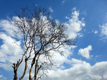 Dead tree against the cloudy sky Stock Image