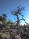 Dead tree against sky stock photo