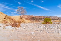Dead tree in Anza Borrego Desert State Park.California.USA. Dead tree in Anza Borrego Desert State Park. Southern California. USA stock photography
