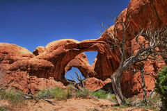 Dead tree of Arches-2 Stock Image
