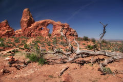 Dead tree of Arches Royalty Free Stock Photography