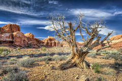 Dead Tree in Arches National Park royalty free stock photos