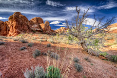 Dead Tree in Arches National Park stock photo