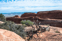 Dead tree in Arches National Park, Utah Royalty Free Stock Photography