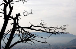 Dead tree, background with mountains and city Stock Photo