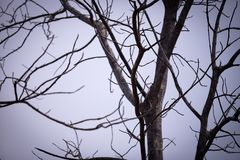 Dead tree background with out leaf royalty free stock photos