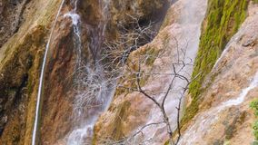 Dead tree on the background of a waterfall. Water cascades flows down from the cliff covered with moss stock video footage