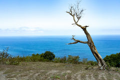 Dead tree at Bali Manta Point Diving place at Nusa Penida island Stock Photo