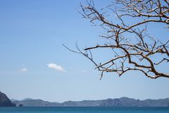 Dead tree with bare branches against scenic seascape. Tropical landscape in autumn. Dead tree on blue sky background. Dead tree with bare branches against royalty free stock photo