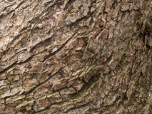 Dead tree bark texture Stock Photography