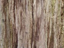 Wooden tree background abstract. stock image