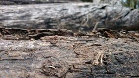 Dead tree barks Stock Photography