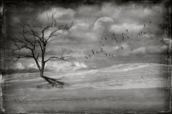 Dead tree in barren Desert landscape royalty free stock photos