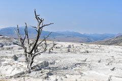Dead Tree in a Barren Landscape - Yellowstone National Park Royalty Free Stock Photography