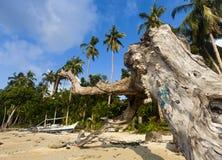 Dead tree on the beach Stock Photos
