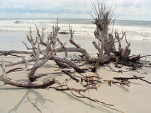 Dead tree on a beach Stock Photo