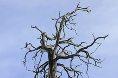 Dead Tree with Bird Stock Photo