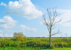 Dead tree with birds in a field in sunlight. Dead tree with birds along a field in sunlight in summer Royalty Free Stock Photo