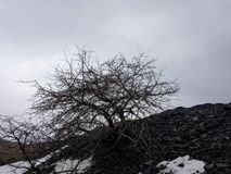 Dead tree on the black hill royalty free stock photography