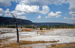 Dead Tree in Black Sand Geyser Basin in Yellowstone National Park in Wyoming USA Stock Photos
