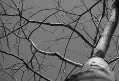 Dead tree black and white. Background Royalty Free Stock Photos