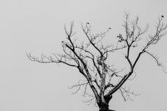 Dead tree. In black and white scene Stock Image