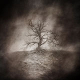 Dead Tree. In a bleak, lonely, windswept landscape beneath a surreal and dreamlike sky rendered in atmospheric sepia tones Stock Photos