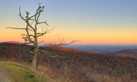 Dead tree in blue ridge mountains Royalty Free Stock Photos