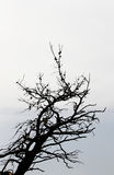 Dead tree, blurred background with the sea Stock Photography