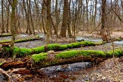 Dead tree on bog Stock Photo