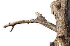 Free Dead Tree Branch Royalty Free Stock Photo - 139013485