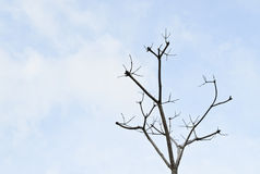 Dead tree branch against blue sky Stock Image
