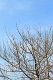Dead tree branch Royalty Free Stock Photo