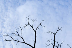 Dead tree branch against cloudy sky Stock Photo