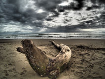 Dead tree branch on beach Royalty Free Stock Image