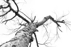 Dead tree branch. Black and  white Stock Photo