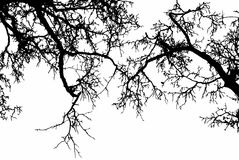 Dead tree branch, black and white Royalty Free Stock Photo