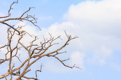Dead tree branch. Stock Photos