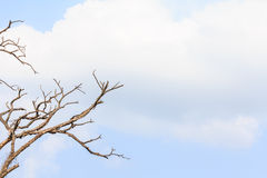 Dead tree branch. Royalty Free Stock Image