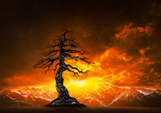 Dead tree branch and colorful skies behind snowcaped mountain stock image